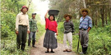 Artikel - Neuer Bericht über den Kampf um Land und natürliche Ressourcen in der Region Verapaces