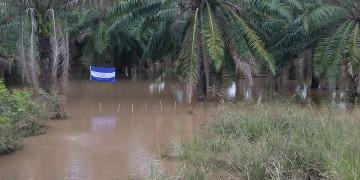 Experten bringen Überschwemmungen mit der extensiven Abholzung in Verbindung
